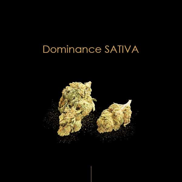 STRAWBERRY CBD SATIVA