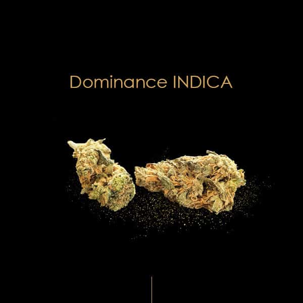 WHITE WIDOW CBD INDICA