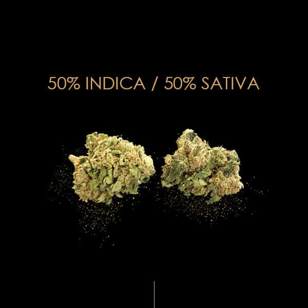 therapy cbd sativa indica